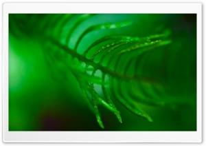 Green Frond Leaf Macro