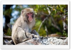 Monkey Sitting On A Branch,...