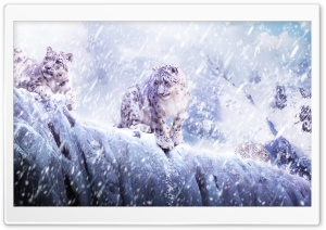 Leopards In The Snow