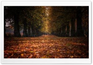 Autumn Stroll, Row of Trees