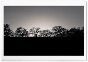 Horizon Trees