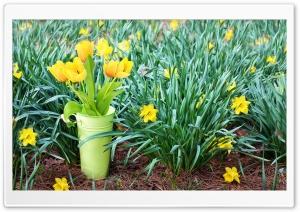 Fresh Cut Spring Tulips Flowers