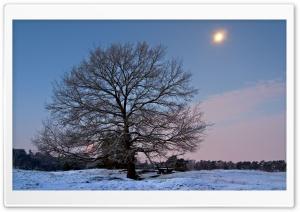 Winter Scenery 18