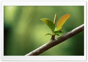 New Leaves Macro