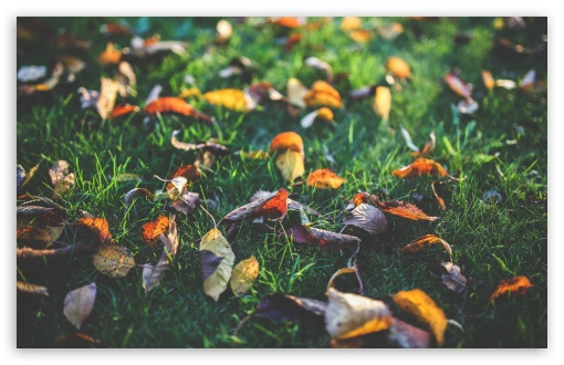 Download Fall Leaves UltraHD Wallpaper