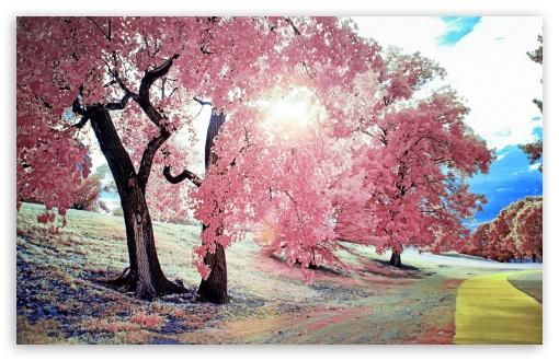 Download Park Walk UltraHD Wallpaper