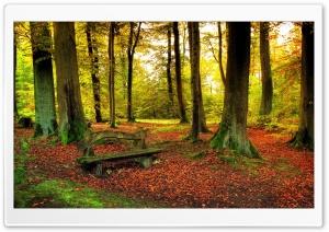 Beautiful Forest, Autumn