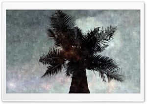 The Star Palm