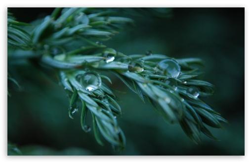 Download Wet Plant UltraHD Wallpaper