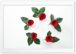 Beautiful Red Roses Flowers...