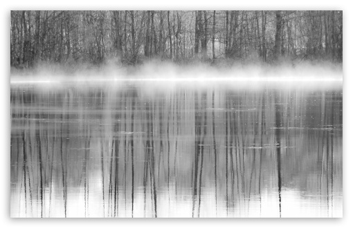 Download Trees Reflections In Water Black And White UltraHD Wallpaper