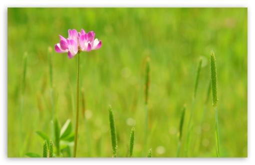 Download Summer Flower UltraHD Wallpaper