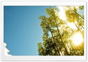 Under The Gold Sun