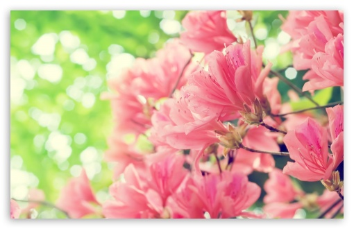 Download Beautiful Spring Flowers UltraHD Wallpaper