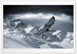 Bald Eagle Flying Over Mountains