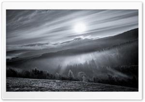 Mist, Sun Rays, Forest,...