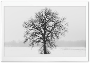 Leafless Tree, Winter