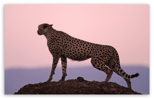 Download Cheetah Habitat UltraHD Wallpaper
