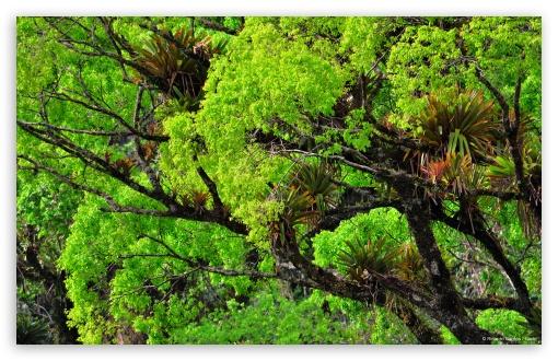 Download Beautiful Tree UltraHD Wallpaper