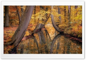 Autumn, Yellow Trees, Forest