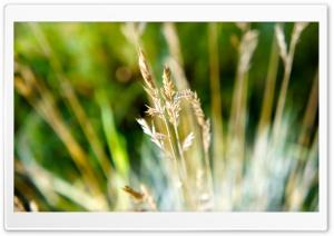 Dry Grass Macro