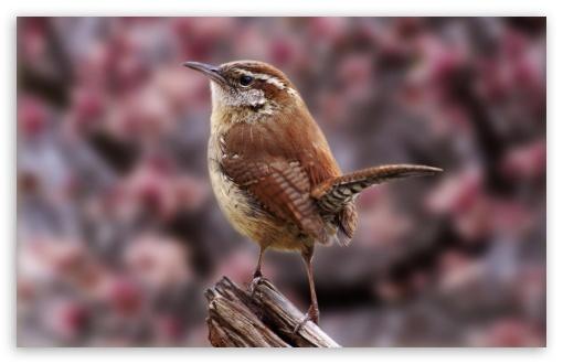Download Brave Bird UltraHD Wallpaper