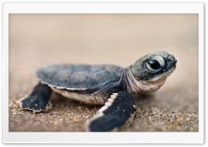 Bing Baby Turtle