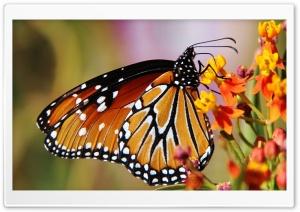 Butterfly In Arizona