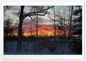Trees, Winter Dusk