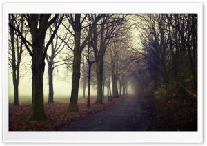 Morning, Road, Autumn