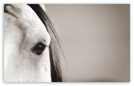 Download Horse Eye UltraHD Wallpaper