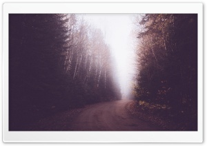 Vintage Foggy Forest Road