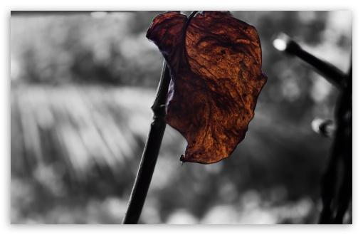 Download Leaf UltraHD Wallpaper