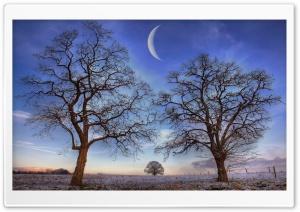 Trees Under New Moon, Winter