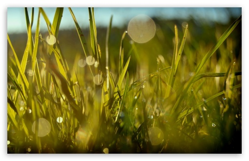 Download Grass, Summer UltraHD Wallpaper
