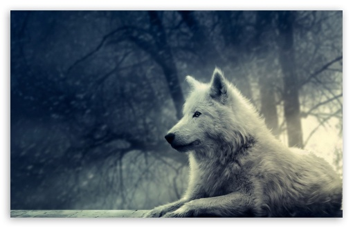 Download White Wolf Painting UltraHD Wallpaper