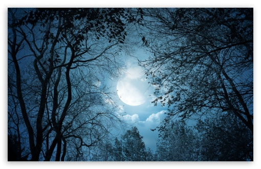 Download Full Moon Night UltraHD Wallpaper