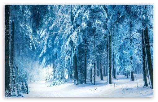 Download Under Heavy Snow UltraHD Wallpaper