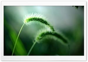 Fresh Wild Plants