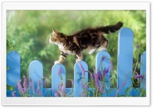 Kitten Walking On A Fence