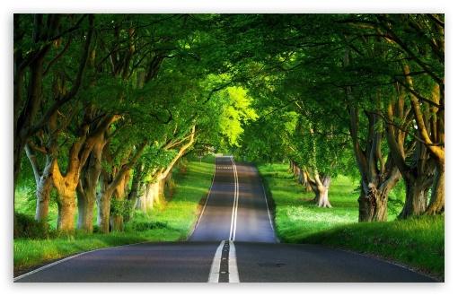 Download Road, Summer UltraHD Wallpaper