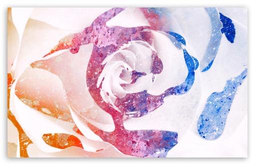 Download Color Splatter Rose UltraHD Wallpaper