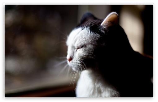 Download Sleepy Cat UltraHD Wallpaper