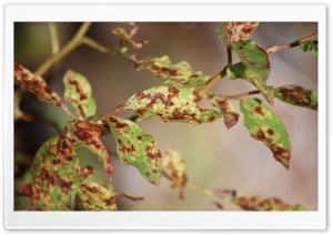 Group of Dotted Leaves