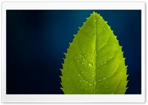 Leaf On Blue Background