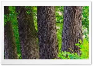 The Tree Logs