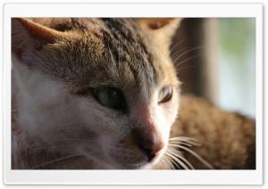 Sun Reflection Cat