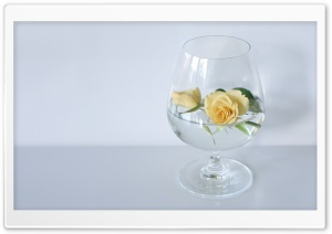 Glass Of Roses