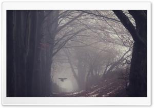 Raven Bird Flying, Trees,...