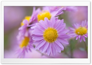 Flowers Macro